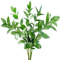 Bloomingmore Natural Fresh Flowers and Greens - Israeli Ruscus , 100 Stems
