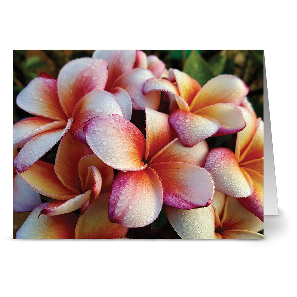 24 Note Cards - Corona Surprise Plumeria - Blank Cards - Off White Ivory Envelopes Included