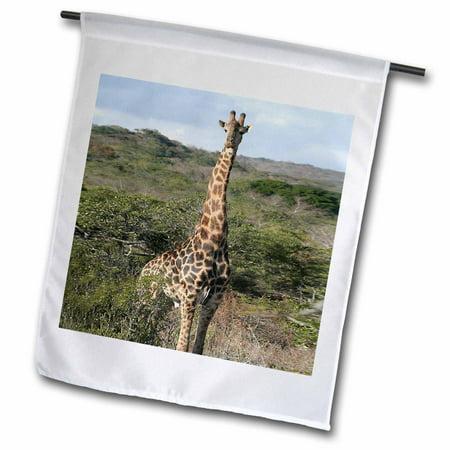 3dRose South African Giraffe head to legs - Garden Flag, 12 by 18-inch ()