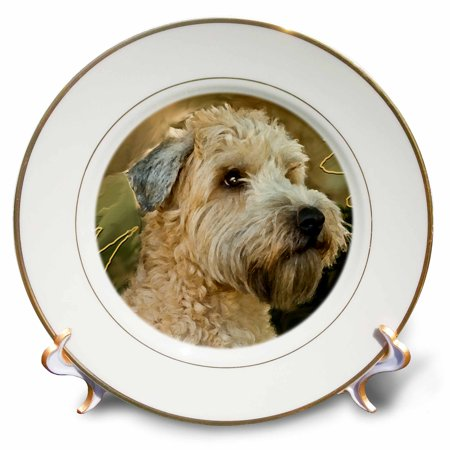3dRose Soft Coated Wheaten Terrier Portrait - Porcelain Plate, 8-inch