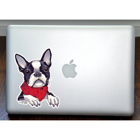 Boston Terrier Wearing a Scarf Art Full Color Decal for 13