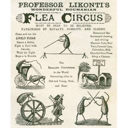 Playbill Of The Professor Likontis Wonderful Romanian Performing Fleas From The Strand Magazine Published 1896 Canvas Art - Ken Welsh Design Pics (24 x 30)