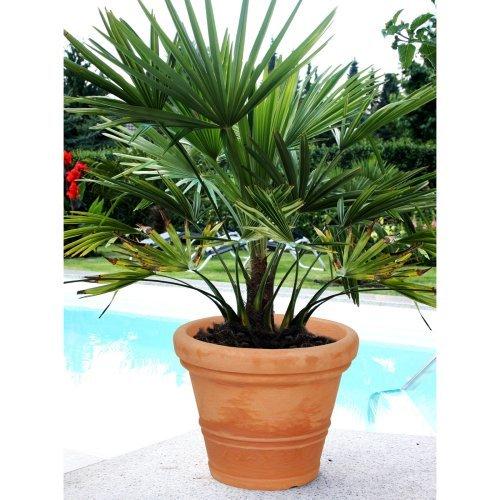 Claudia Round Resin Planter