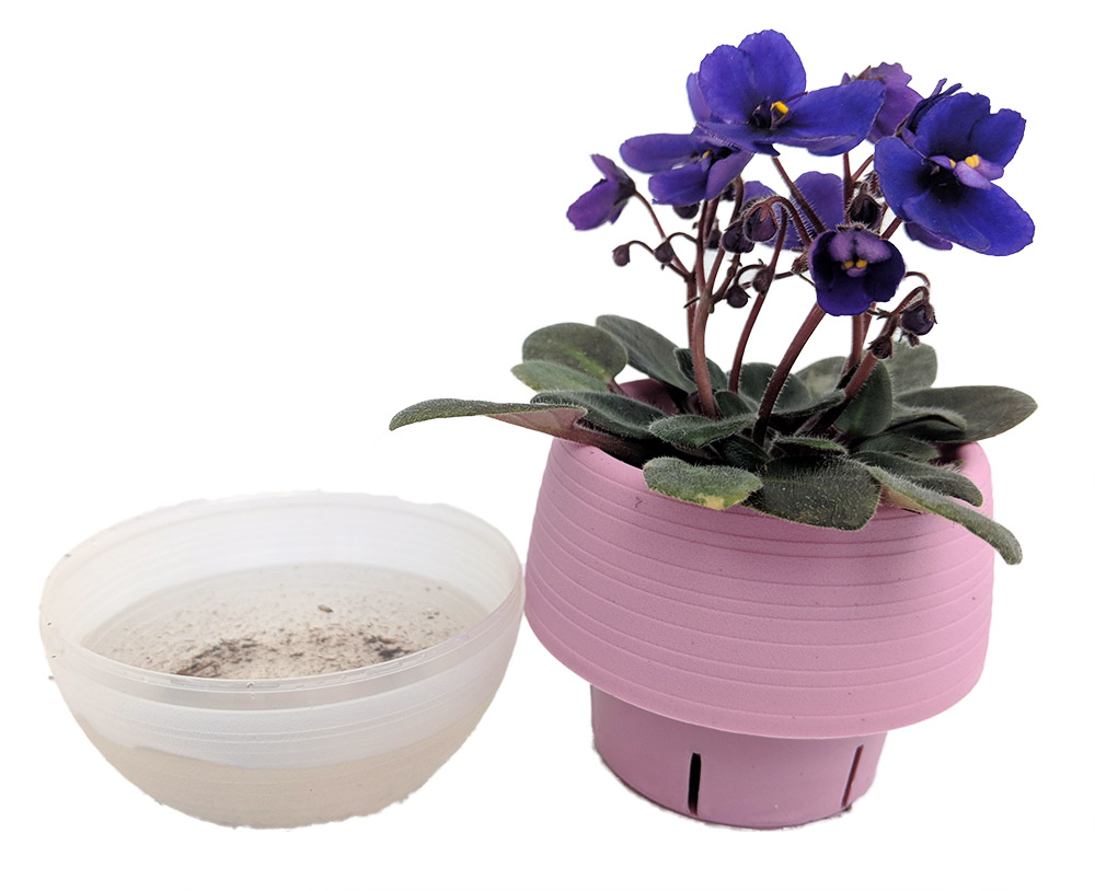 Miniature African Violet In 25 Pink Self Watering Pot Walmartcom