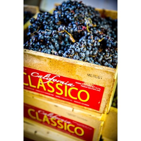 Laminated Poster Wine Vineyard Winemaking Grapes Merlot Vine Poster Print 11 x 17 ()