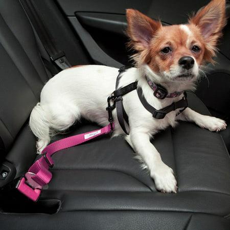Dog Seat Belt Harness >> Adjustable Pet Car Seat Belt Keep Your Dog Safely Restrained While Driving