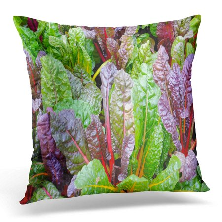 BOSDECO Colorful Garden Swiss Chard Growing Green Plant Pillowcase Pillow Cover Cushion Case 18x18 inch - image 1 of 1