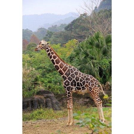 LAMINATED POSTER Woodland Giraffe High Bulk Unicorn Spot Pee Zoo Poster  Print 11 x 17