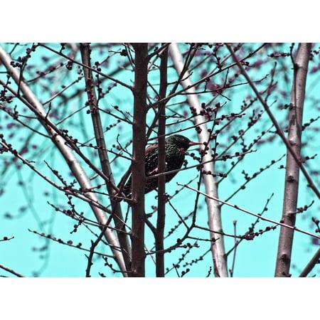 Bird Vintage Tee (Canvas Print Vintage Spring Background Tree Bird Spring Stretched Canvas 10 x 14)