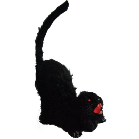 Cat Animated Halloween - Halloween Names For Male Cats