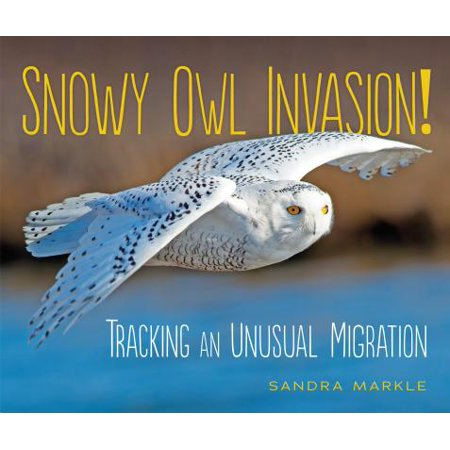 Snowy Owl Invasion! : Tracking an Unusual