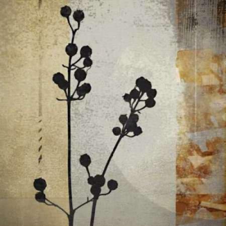 Sombras De Oro Ii Rolled Canvas Art   Noah  12 X 12