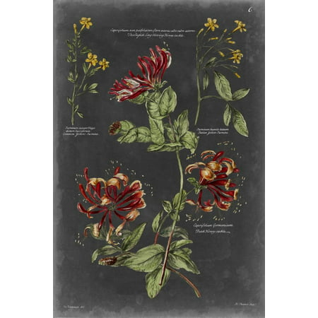 Vintage Botanical Chart II Print Wall Art By Vision Studio