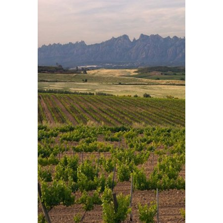 - Spring Vineyards with Montserrat Mountain Catalonia Spain Poster Print by Janis Miglavs