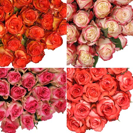 "Image of Fresh Cut Assorted Bicolor Roses, 20"", Pack of 50 by InBloom Group"