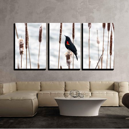 wall26 - 3 Piece Canvas Wall Art - Red Winged Blackbird Standing on Cattail - Modern Home Decor Stretched and Framed Ready to Hang - 24