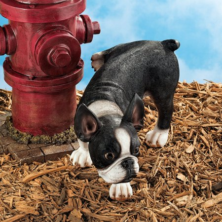 Lifting a Leg Naughty Boston Terrier Dog Statue