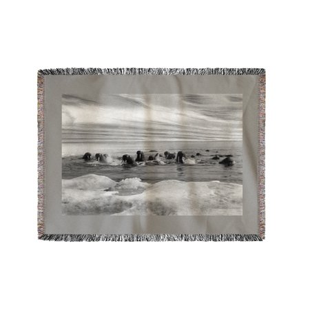 Walrus among the Ice Floes in Bering Sea Alaska Photograph (60x80 Woven Chenille Yarn