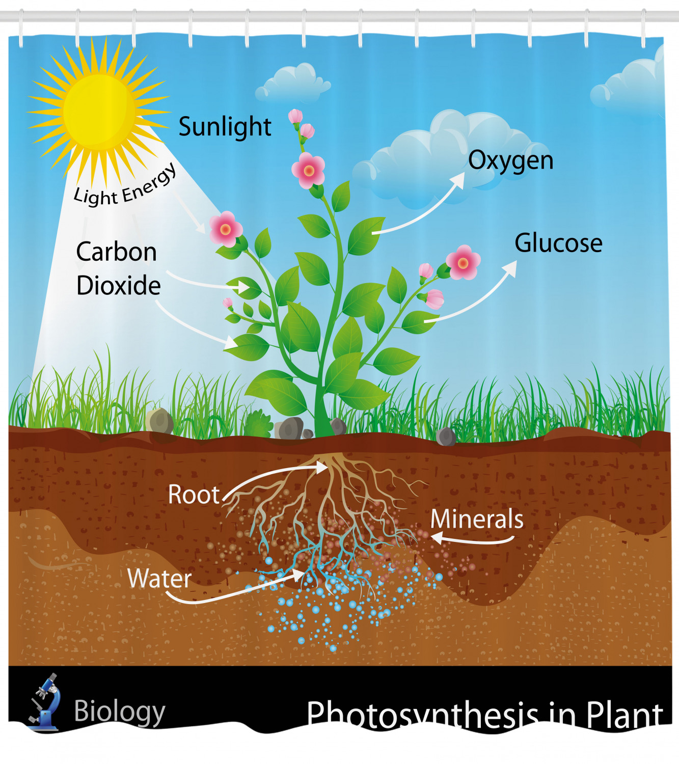 Educational Shower Curtain Photosynthesis In Plant Wiring Diagram
