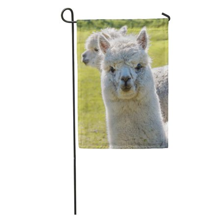 LADDKE Brown Face White Llama Alpaca Walking Toward The Camera Green Garden Flag Decorative Flag House Banner 12x18 inch ()