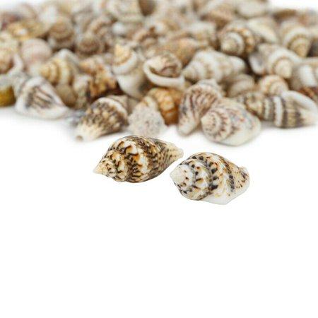 Small Concho (KABOER 100pcs Small Sea Shells Assorted Natural Seashells Conch Crafts DIY Decoration )