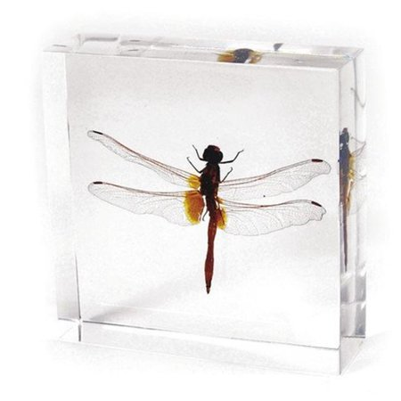 ED SPELDY EAST TE29 Paperweight  Dragonfly
