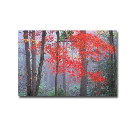 Splash of Red by Patrick Zephyr Premium Gallery-Wrapped Canvas Giclee Panorama Art - 16 x 24 x 1.5