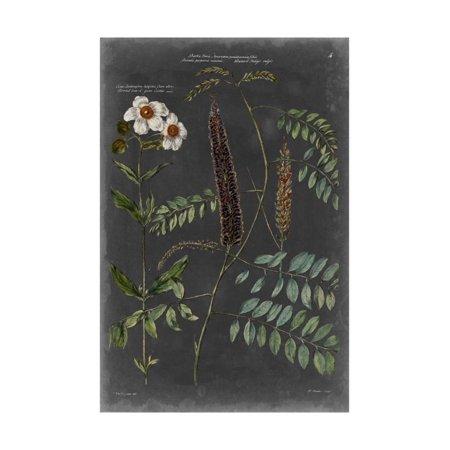 Vintage Botanical Chart V Print Wall Art By Vision Studio