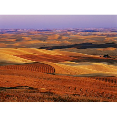View of Colorful Palouse Farm Country at Twilight, Washington, USA Print Wall Art By Dennis Flaherty