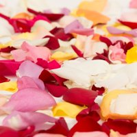 Natural Fresh Flowers - Rainbow Rose Petals, Approximately 3000 petals