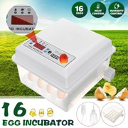 Best Incubators - Egg Incubator, 16 Eggs, Dual Power Supply Fully Review