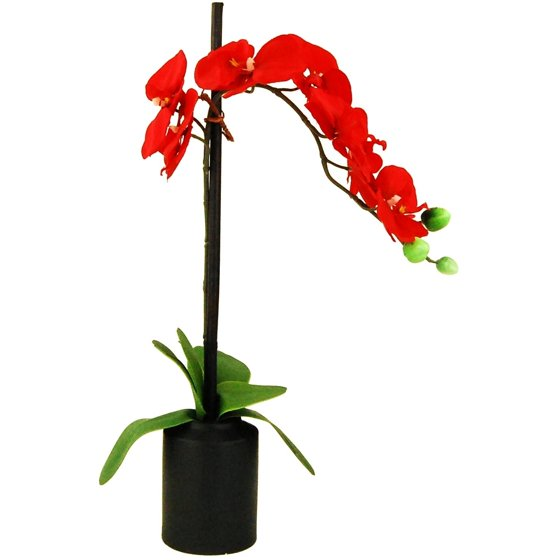 21 Artificial Phalaenopsis Orchid Tied To A Bamboo Stake In A Black