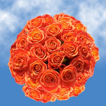 Globalrose 150 Fresh Cut Orange Roses For Valentines Day   Impulse Roses   Fresh Flowers Express Delivery   Perfect For Valentines Day