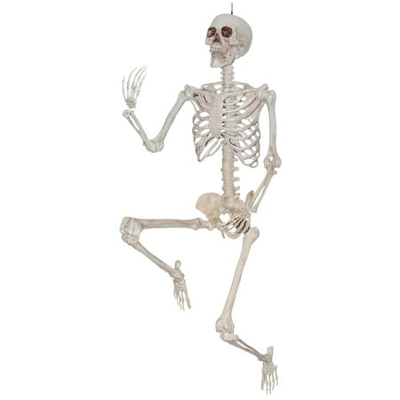 Lifesize Pose and Hold Skeleton - Parrot Skeleton