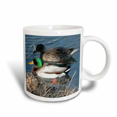 3dRose Mallard Duck Couple, Ceramic Mug, 15-ounce](Ceramic Duck)