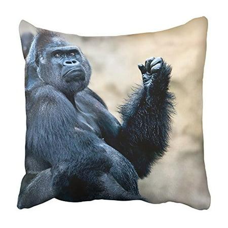 ARHOME Closeup Portrait of Beautiful Black Cane Corso Orangutans Pure Breed Studio Pillowcase Cushion Cover 18x18 inch (Orangutan Portrait)