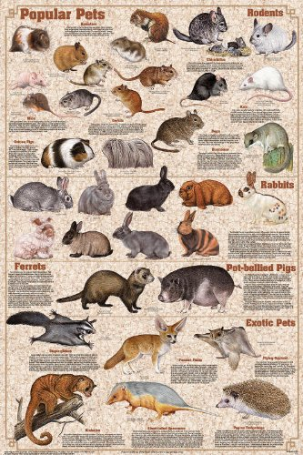 Botanical Animals Reptiles Chart Educational Poster 24x36 30in K114