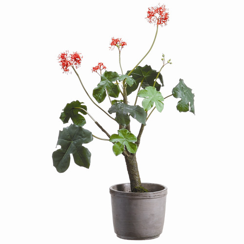 Tori Home Gout Stalk Plant in Cement Pot