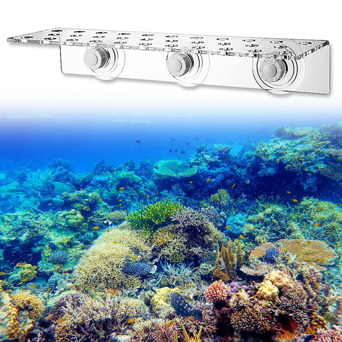 Coral Rack Acrylic Coral Frag Rack 13 Hole Coral Bracket Fish Tank Aquarium Plant Holder with Suction Cup