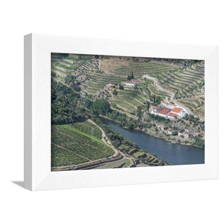 Hillside Framed (Portugal, Douro Valley, Douro River and Hillside Vineyard Framed Print Wall Art By Rob)