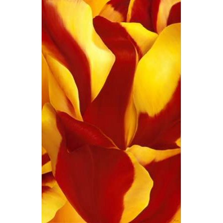 Magnificant Flower Ii Canvas Art   Yvonne Poelstra Holzhaus  12 X 18