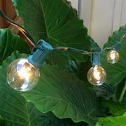 Globe String Lights - Clear G40 Bulbs (10) - Green Cord