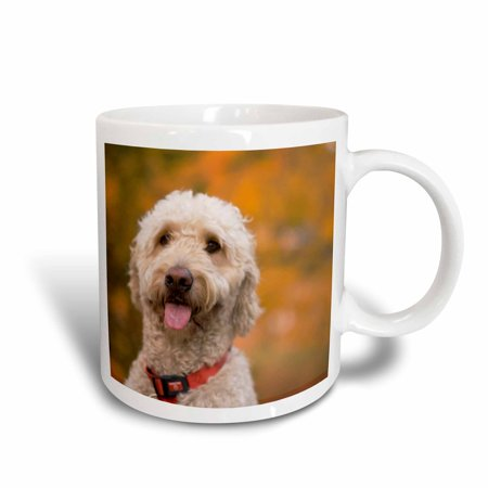 3dRose Massachusetts, Reading, Labradoodle dog - US22 JEN0072 - Jim Engelbrecht, Ceramic Mug, 11-ounce