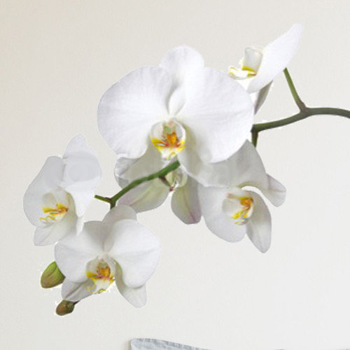 Brewster Home Fashions Euro Orchid Wall Decal