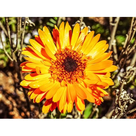 Canvas Print Plant Marigold Calendula Blossom Flower Petal Stretched Canvas 10 x 14