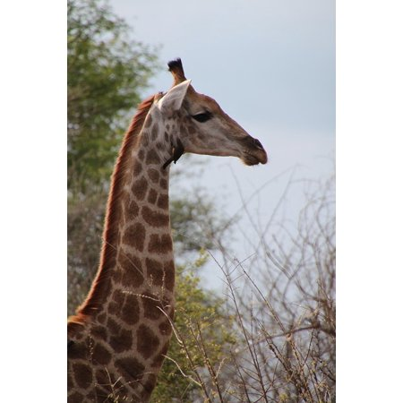 LAMINATED POSTER Safari Animal Animals Nature South Africa Wildlife Poster Print 24 x