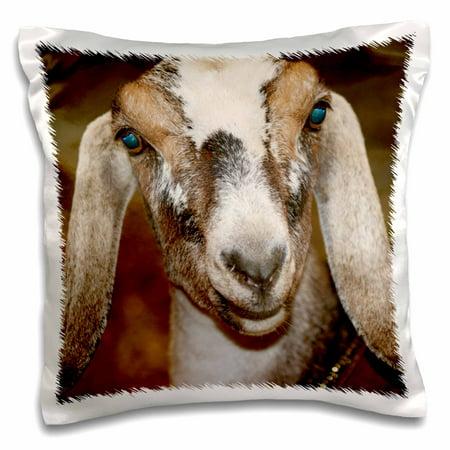 3dRose Nubian Dairy Goat Doe White Stripe Caprine sq - Pillow Case, 16 by 16-inch