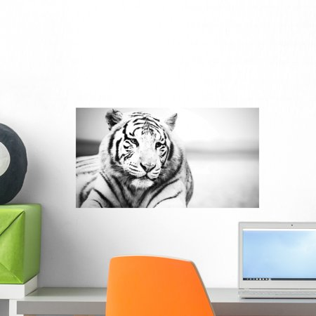 White Tiger Wall Mural Decal Sticker Wallmonkeys Peel Stick Vinyl Grap
