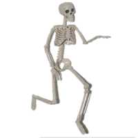 Loliuicca Halloween Poseable Full Life Size Human Skeleton Deals