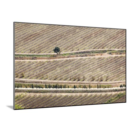 Aerial View Of Orchards South Africa Wood Mounted Print Wall Art By Richard Du Toit